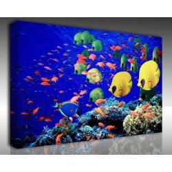 - kanvas tablo 00060