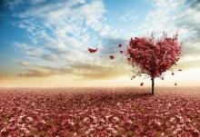 Çiçek - duvar posteri çiçek 114296290