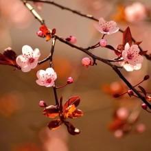 Çiçek - duvar posteri çiçek 116057422