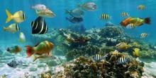Deniz Altı - duvar posteri denizaltı 117535072