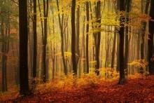 Doğa - duvar posteri doğa 124136578