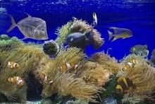 Deniz Altı - duvar posteri denizaltı 13003983