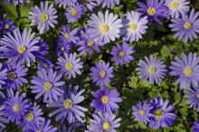 Çiçek - duvar posteri çiçek 137937749