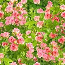Çiçek - duvar posteri çiçek 102842582