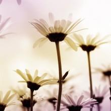 Çiçek - duvar posteri çiçek 1915358