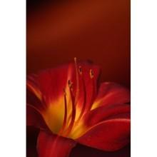 Çiçek - duvar posteri çiçek 2306621