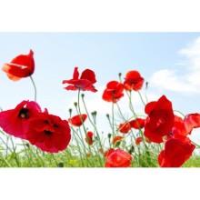 Çiçek - duvar posteri çiçek 34690249
