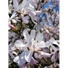 Çiçek - duvar posteri çiçek 39235981