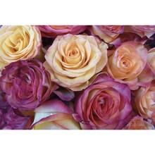 Çiçek - duvar posteri çiçek 4 1453