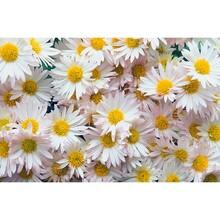 Çiçek - duvar posteri çiçek 469