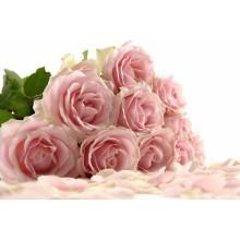 Çiçek - duvar posteri çiçek 59783329