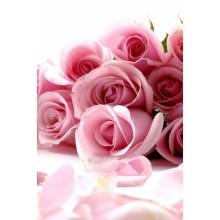 Çiçek - duvar posteri çiçek 66935593