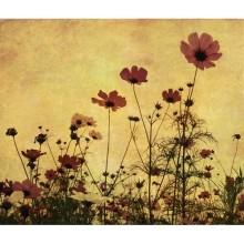 Çiçek - duvar posteri çiçek 6870373