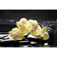 Çiçek - duvar posteri çiçek 75309148