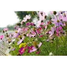 Çiçek - duvar posteri çiçek 88776769