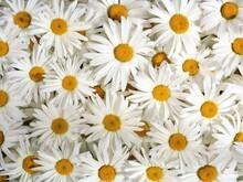 Çiçek - duvar posteri çiçek A103-003