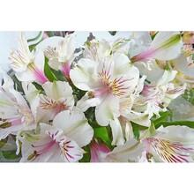 Çiçek - duvar posteri çiçek G 5467