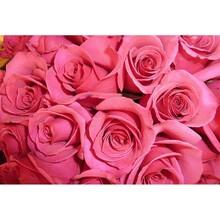 Çiçek - duvar posteri çiçek G 5470
