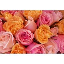 Çiçek - duvar posteri çiçek G 5472