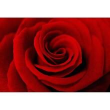 Çiçek - duvar posteri çiçek G 5473