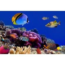 Deniz Altı - duvar posteri denizaltı 77259880