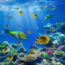 Deniz Altı - duvar posteri denizaltı 79323445