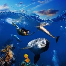 Deniz Altı - duvar posteri denizaltı 89609686
