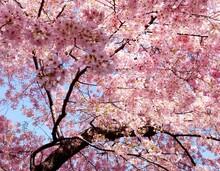 Doğa - duvar posteri doğa A101-004