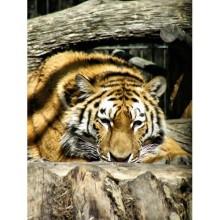 Hayvanlar - duvar posteri hayvanlar 29065978