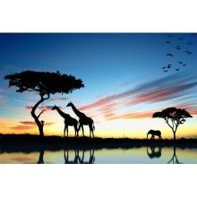 Hayvanlar - duvar posteri hayvanlar 70057171
