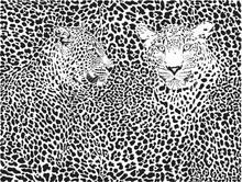 Hayvanlar - duvar posteri hayvanlar N-1062