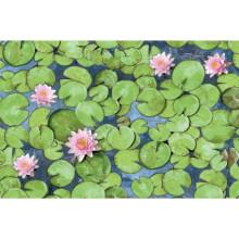 Alkor D-c-fix Dekore - Yapışkanlı Folyo Alkor 280-0001 Water Lily